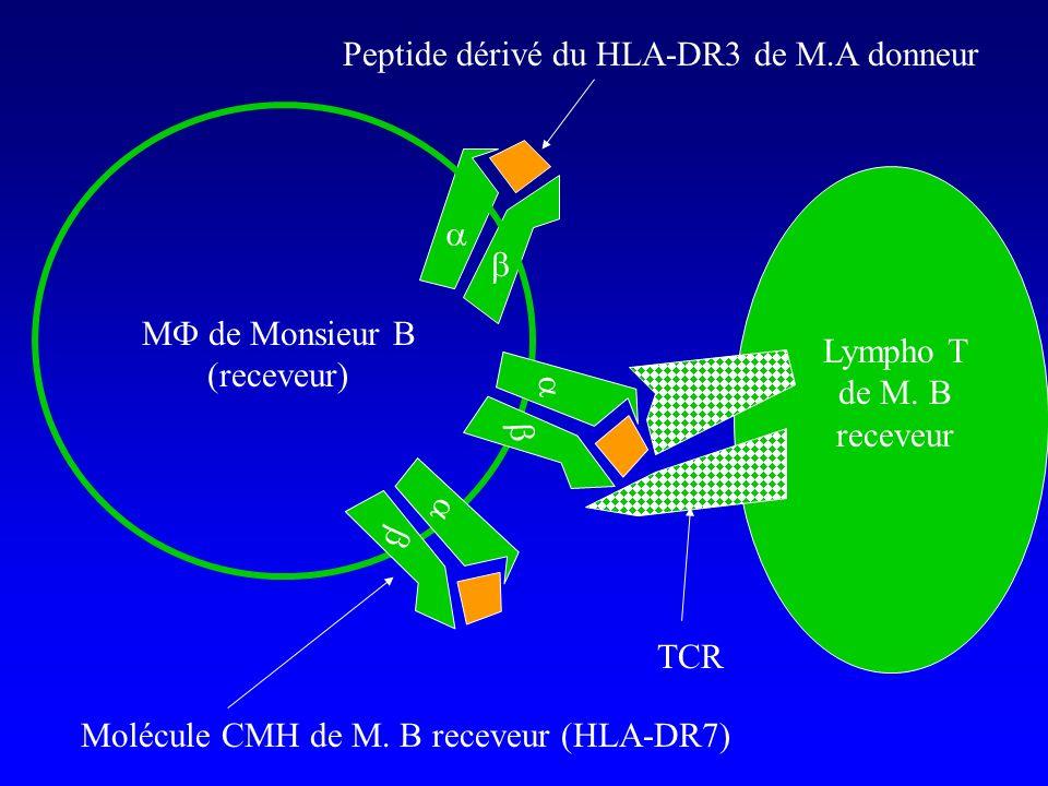 Peptide dérivé du HLA-DR3 de M.A donneur