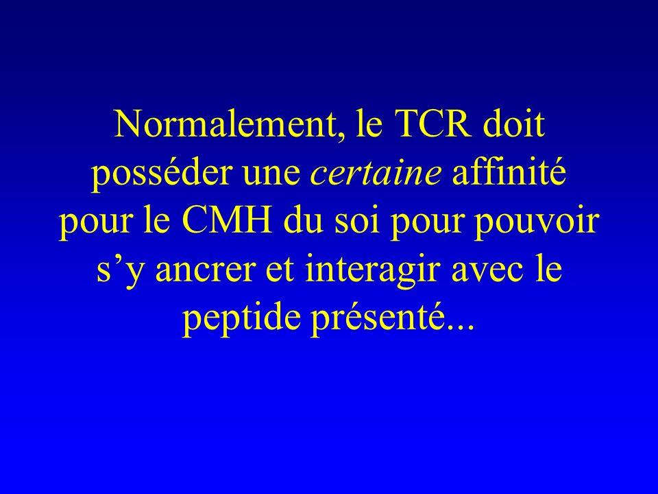 Normalement, le TCR doit posséder une certaine affinité pour le CMH du soi pour pouvoir s'y ancrer et interagir avec le peptide présenté...