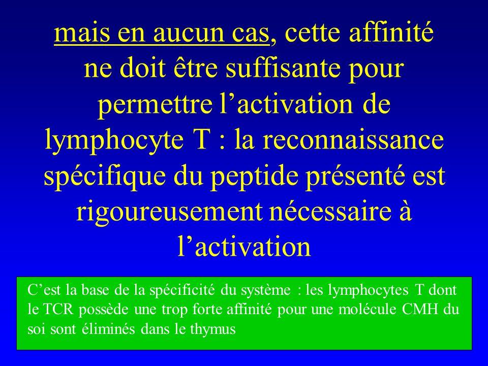 mais en aucun cas, cette affinité ne doit être suffisante pour permettre l'activation de lymphocyte T : la reconnaissance spécifique du peptide présenté est rigoureusement nécessaire à l'activation