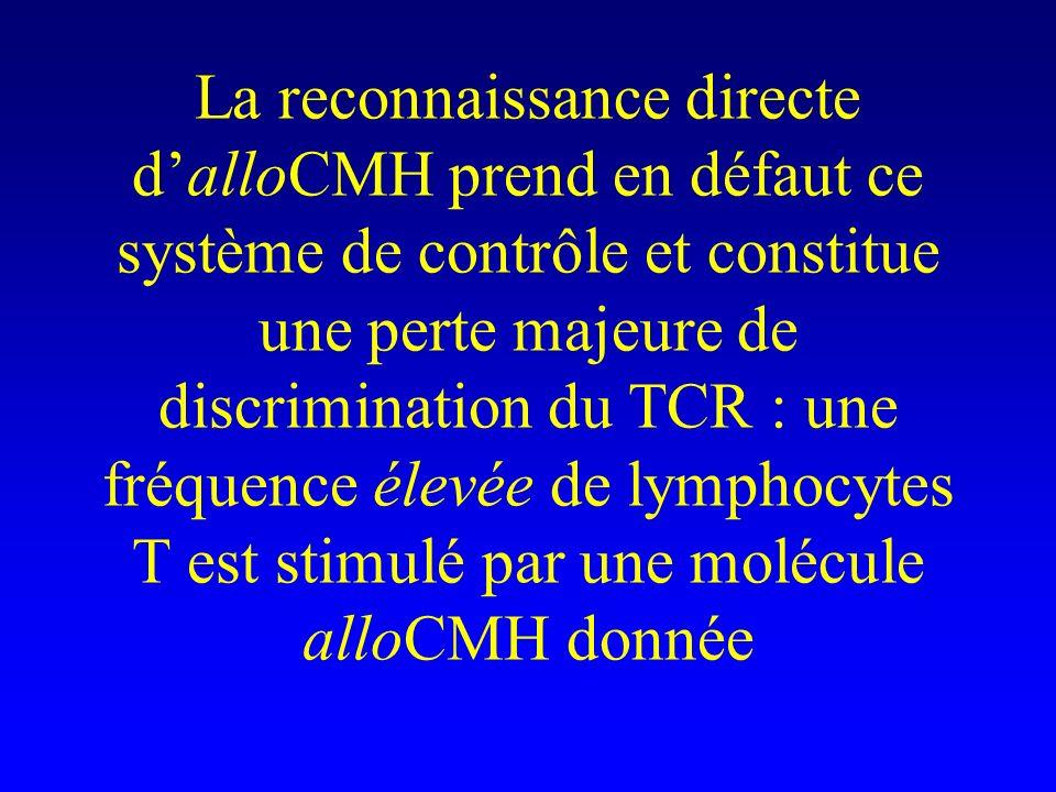 La reconnaissance directe d'alloCMH prend en défaut ce système de contrôle et constitue une perte majeure de discrimination du TCR : une fréquence élevée de lymphocytes T est stimulé par une molécule alloCMH donnée