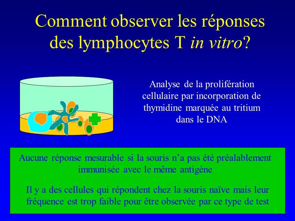 Comment observer les réponses des lymphocytes T in vitro