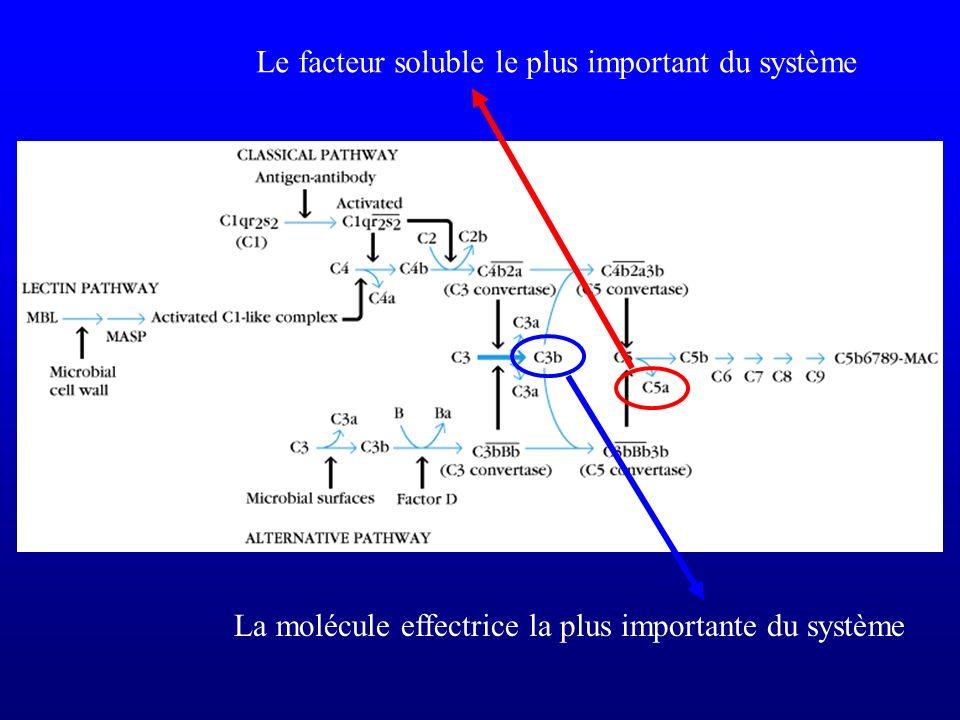 Le facteur soluble le plus important du système