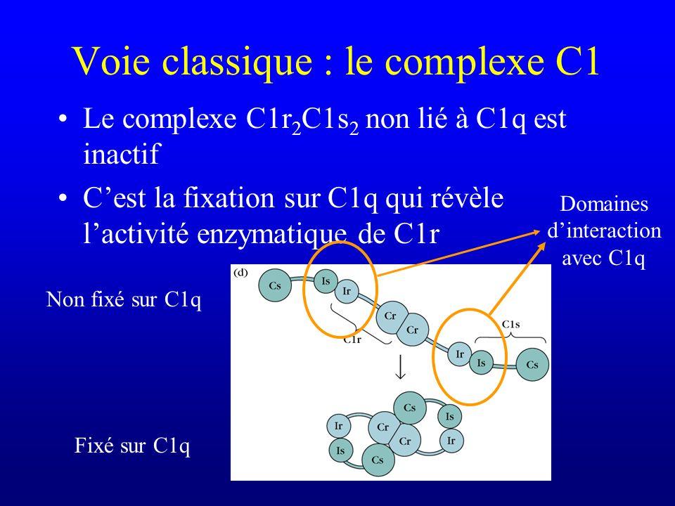 Voie classique : le complexe C1