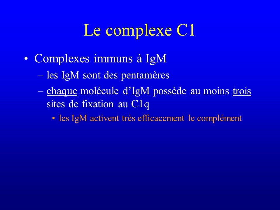 Le complexe C1 Complexes immuns à IgM les IgM sont des pentamères