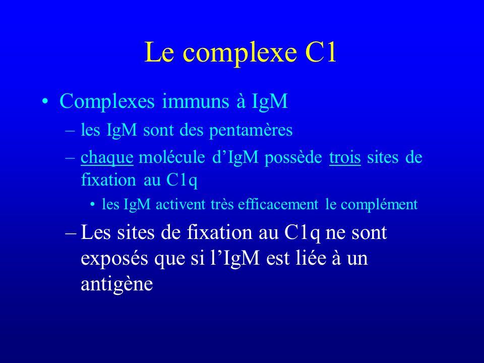 Le complexe C1 Complexes immuns à IgM