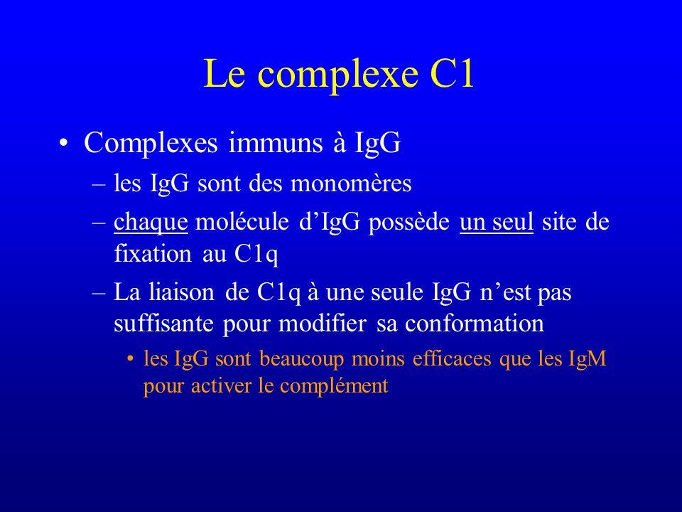 Le complexe C1 Complexes immuns à IgG les IgG sont des monomères