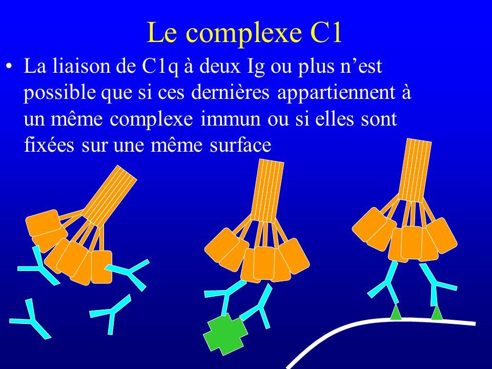 Le complexe C1