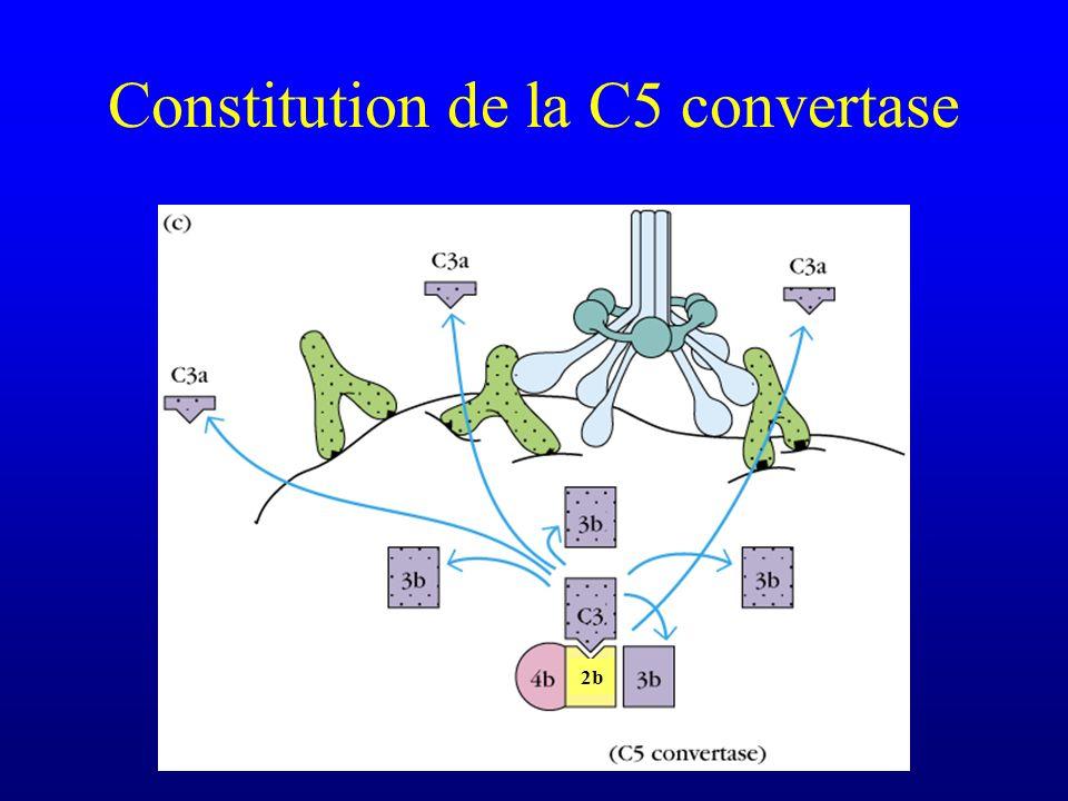 Constitution de la C5 convertase
