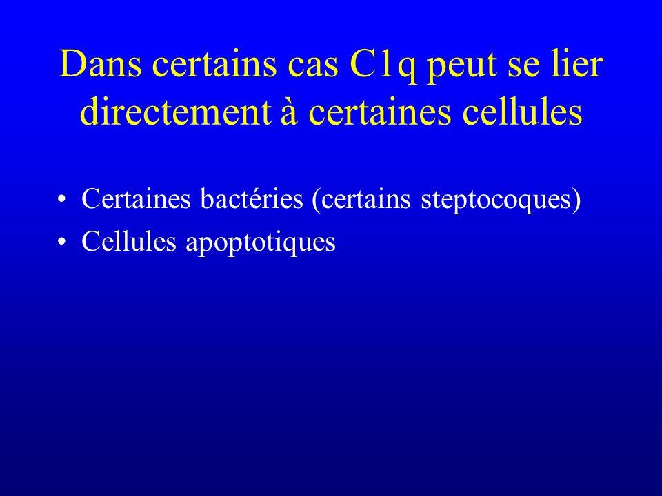 Dans certains cas C1q peut se lier directement à certaines cellules