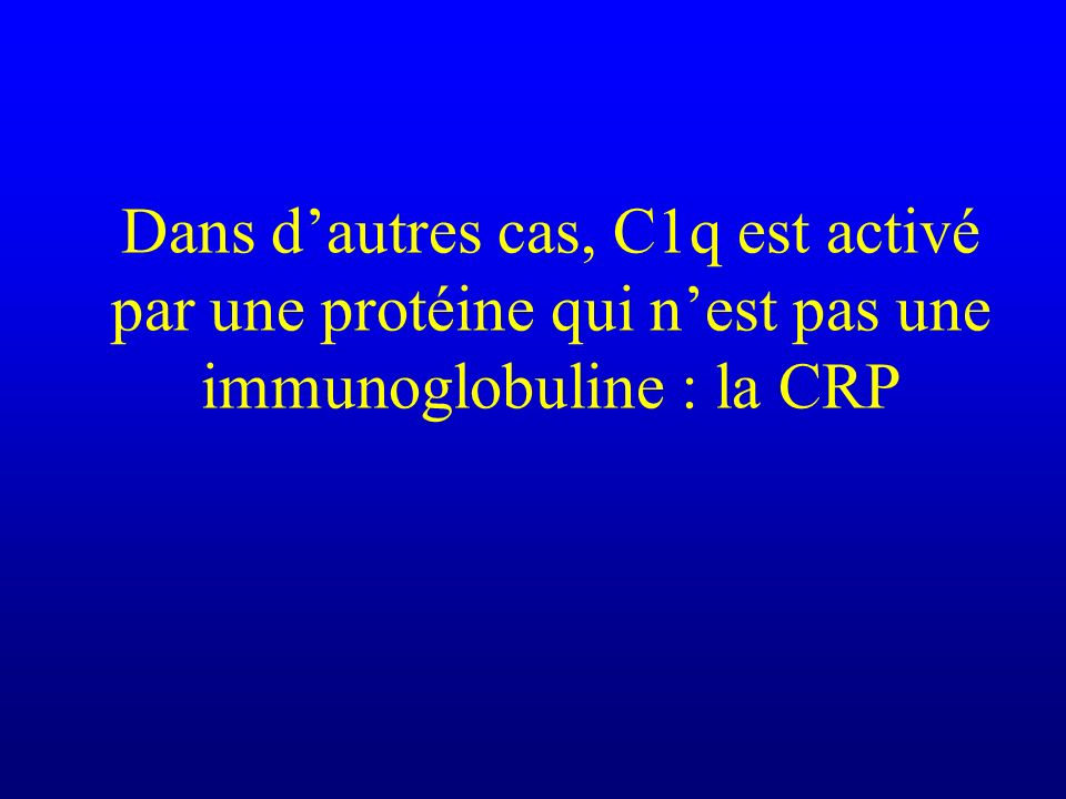 Dans d'autres cas, C1q est activé par une protéine qui n'est pas une immunoglobuline : la CRP