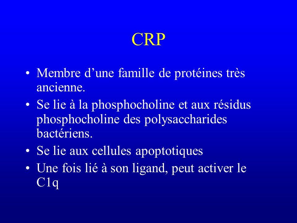 CRP Membre d'une famille de protéines très ancienne.