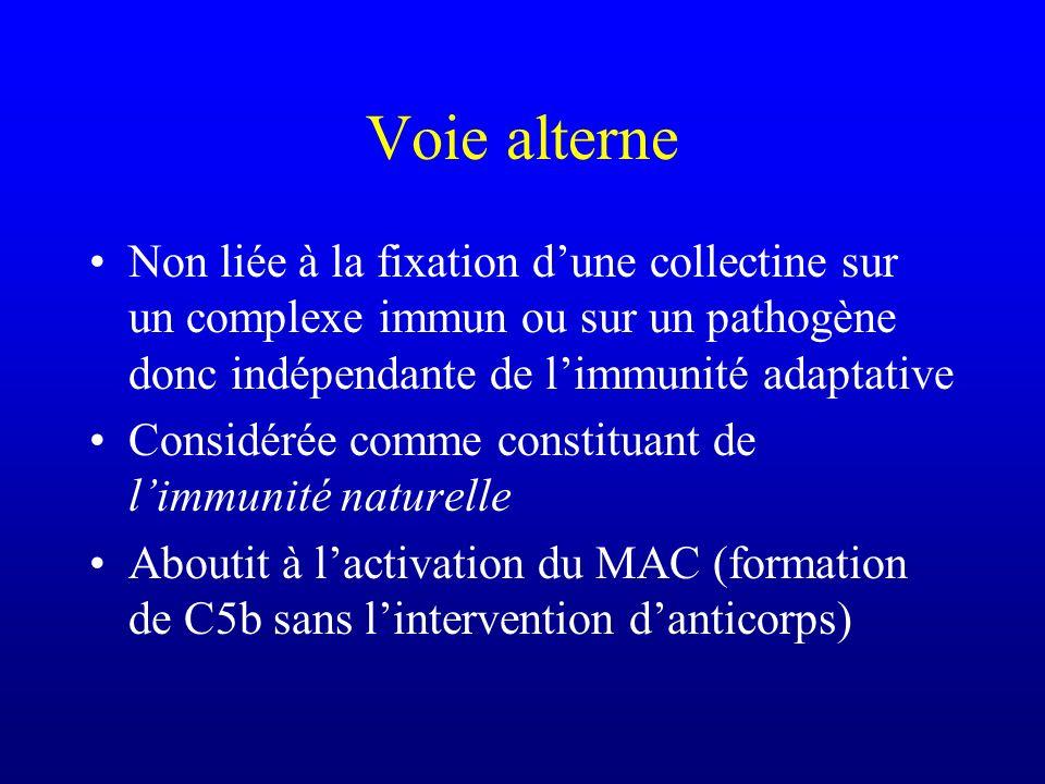 Voie alterne Non liée à la fixation d'une collectine sur un complexe immun ou sur un pathogène donc indépendante de l'immunité adaptative.