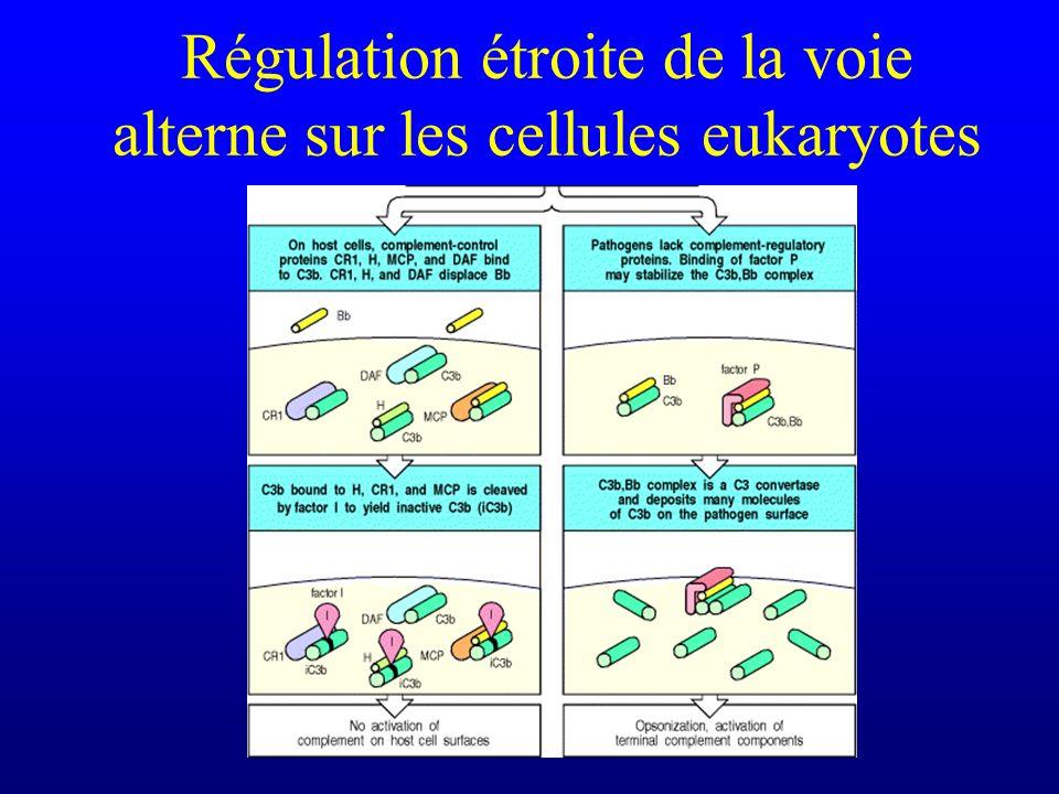 Régulation étroite de la voie alterne sur les cellules eukaryotes