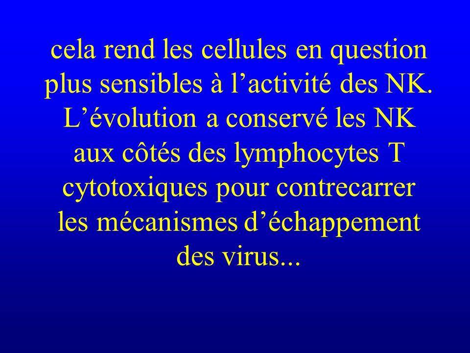 cela rend les cellules en question plus sensibles à l'activité des NK