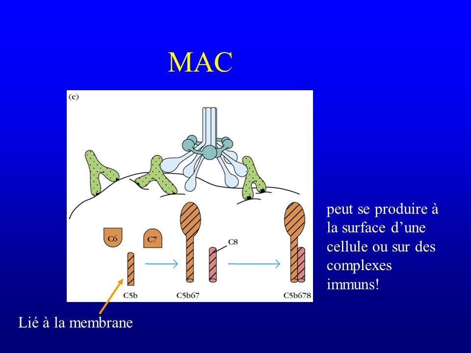 MAC peut se produire à la surface d'une cellule ou sur des complexes immuns! Lié à la membrane