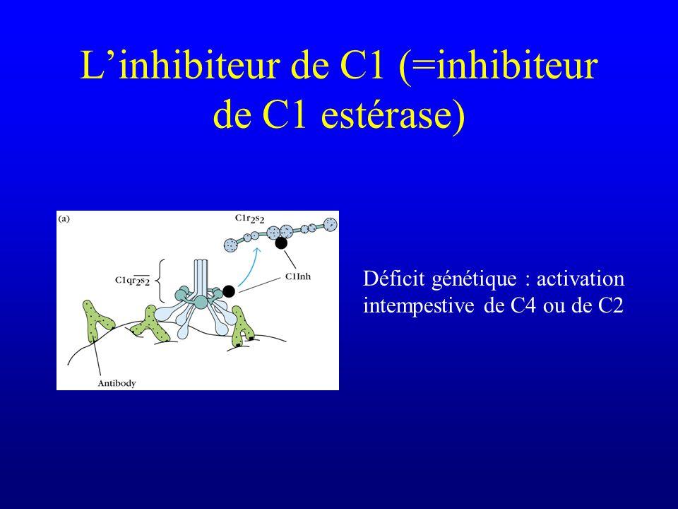 L'inhibiteur de C1 (=inhibiteur de C1 estérase)