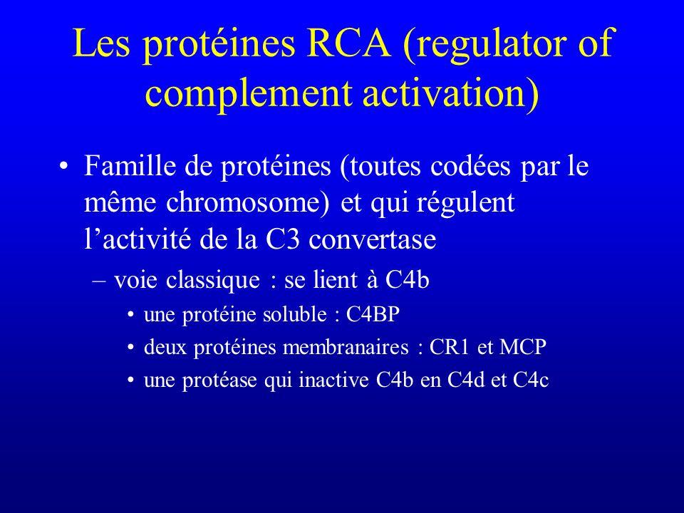 Les protéines RCA (regulator of complement activation)