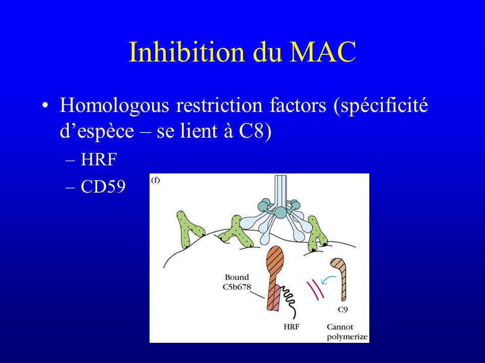 Inhibition du MAC Homologous restriction factors (spécificité d'espèce – se lient à C8) HRF CD59