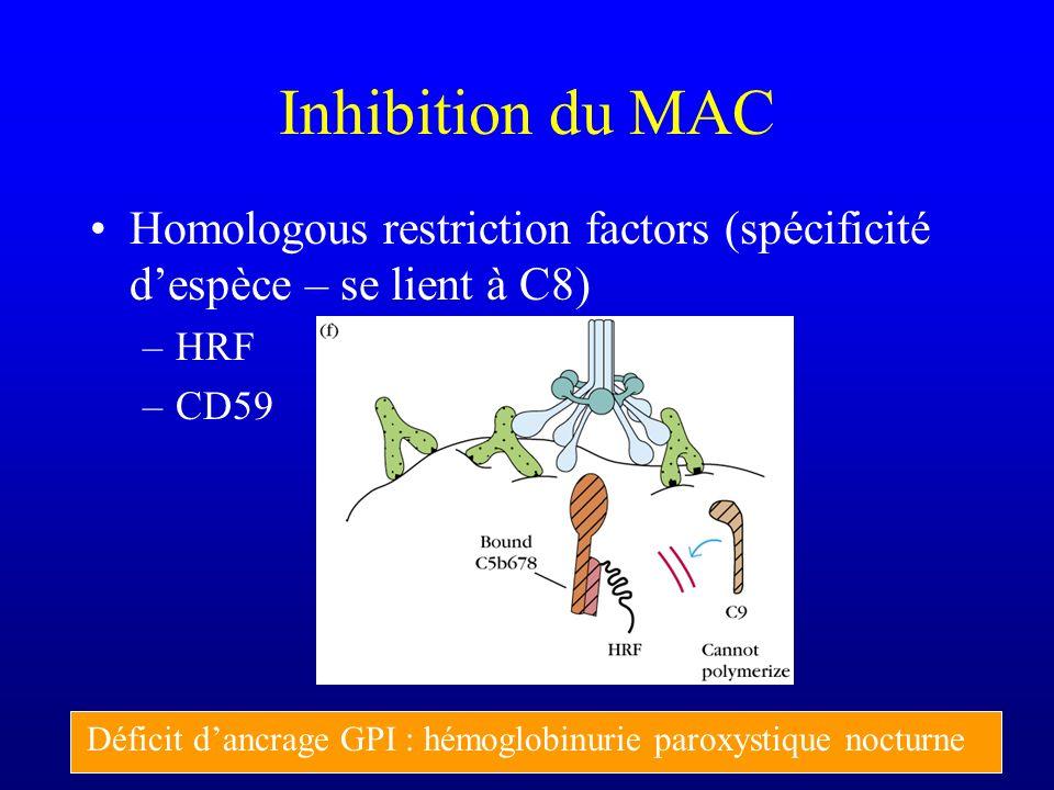 Inhibition du MAC Homologous restriction factors (spécificité d'espèce – se lient à C8) HRF. CD59.