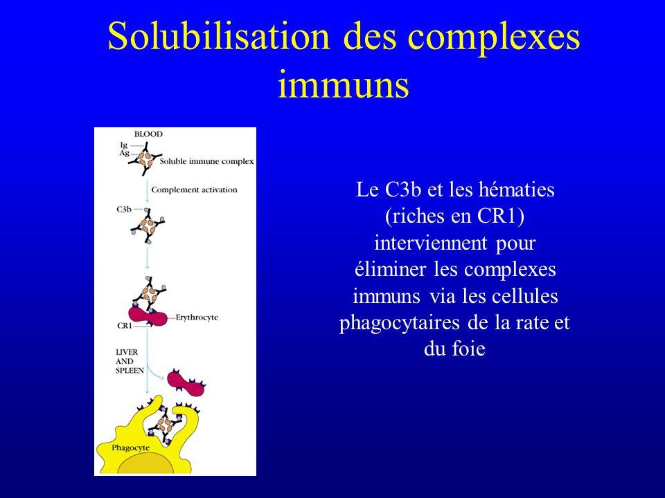 Solubilisation des complexes immuns