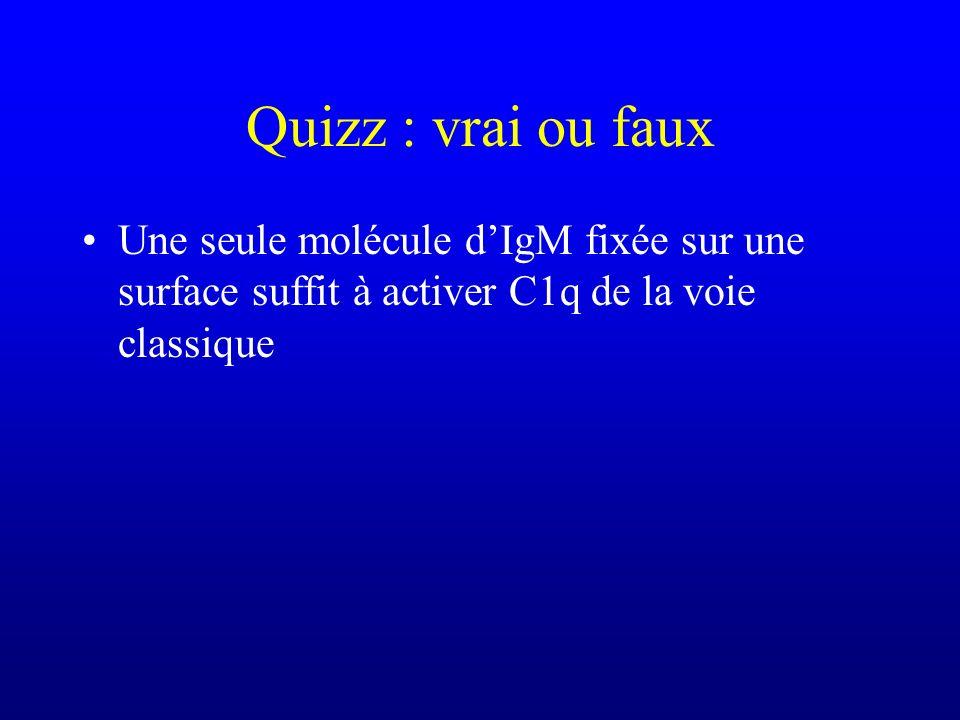 Quizz : vrai ou faux Une seule molécule d'IgM fixée sur une surface suffit à activer C1q de la voie classique.