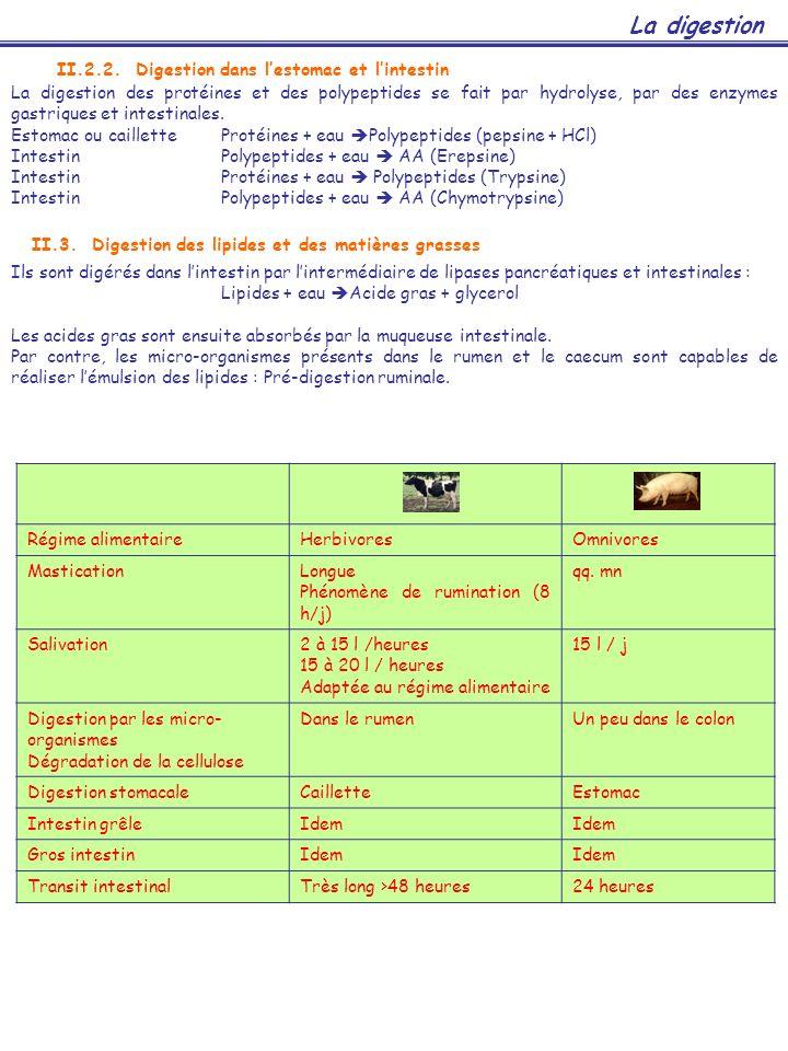 La digestion II.2.2. Digestion dans l'estomac et l'intestin