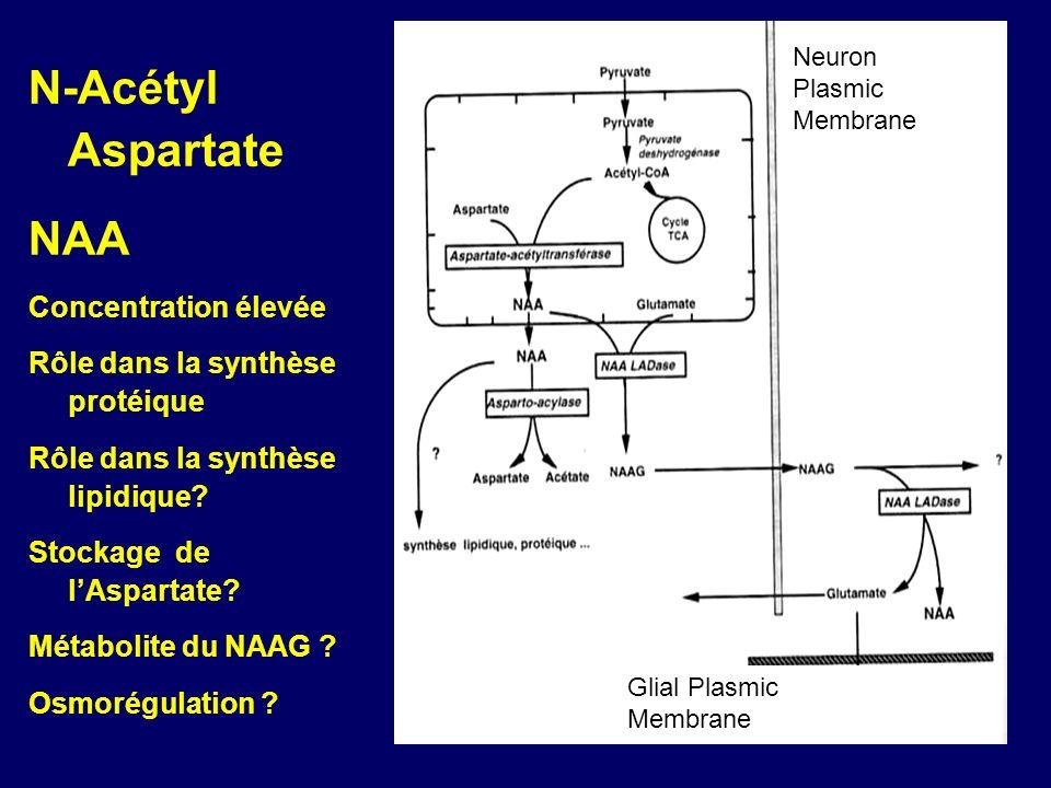 N-Acétyl Aspartate NAA Concentration élevée