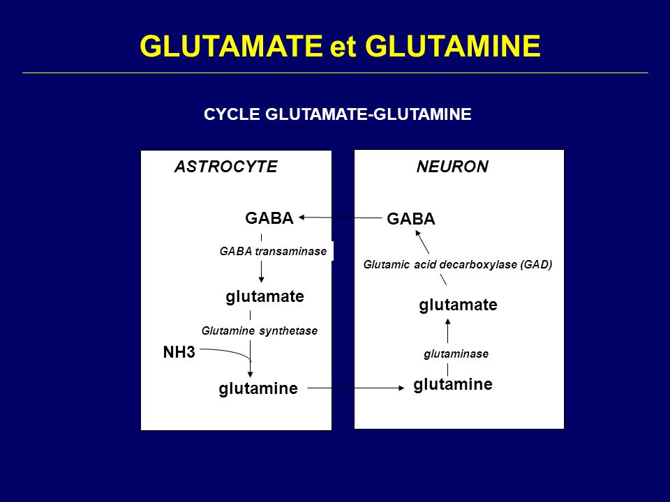 GLUTAMATE et GLUTAMINE
