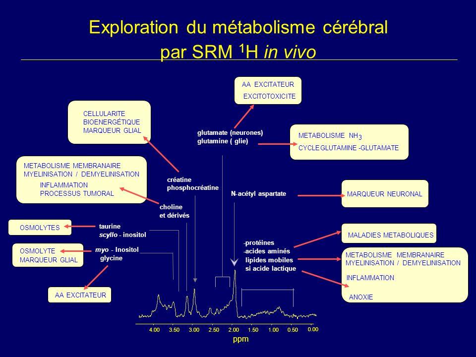 Exploration du métabolisme cérébral