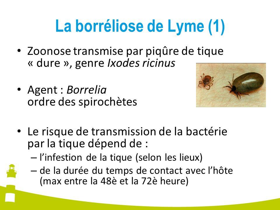 La borréliose de Lyme (1)