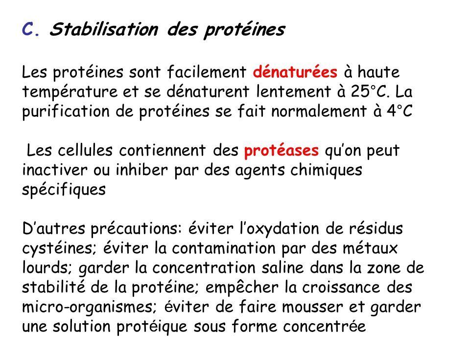C. Stabilisation des protéines