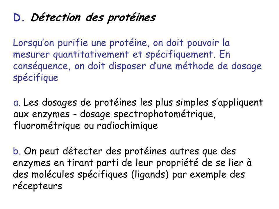 D. Détection des protéines