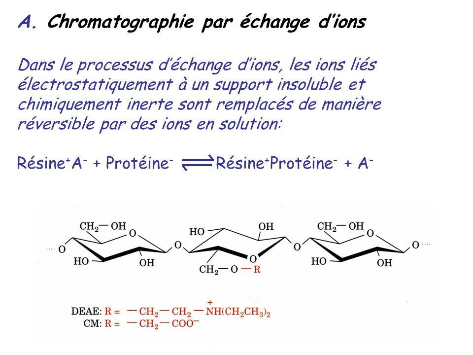 A. Chromatographie par échange d'ions