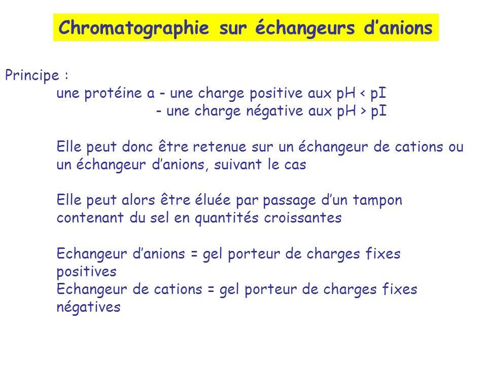 Chromatographie sur échangeurs d'anions