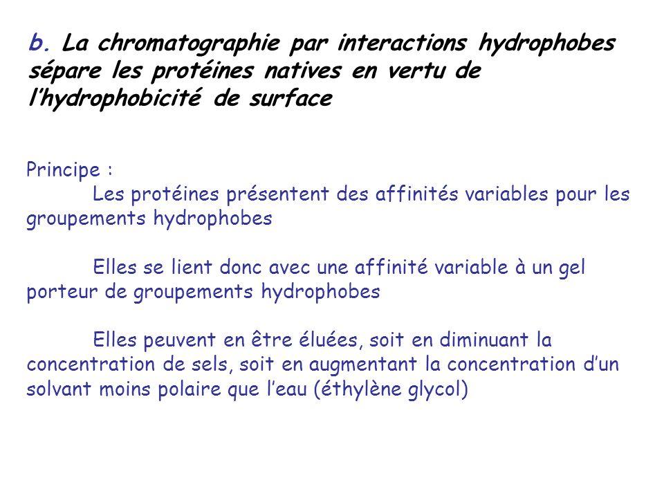 b. La chromatographie par interactions hydrophobes sépare les protéines natives en vertu de l'hydrophobicité de surface