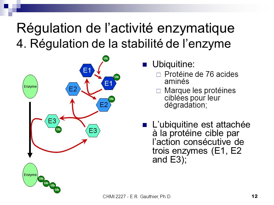 Régulation de l'activité enzymatique 4