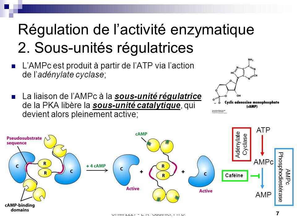Régulation de l'activité enzymatique 2. Sous-unités régulatrices