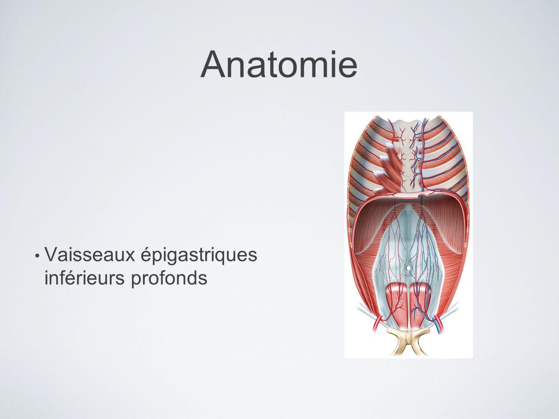 Anatomie Vaisseaux épigastriques inférieurs profonds