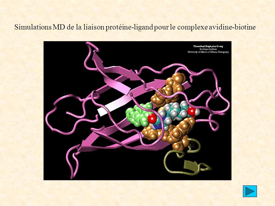 Simulations MD de la liaison protéine-ligand pour le complexe avidine-biotine