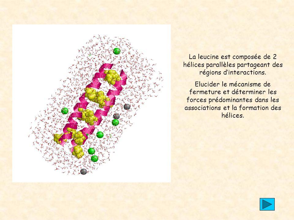 La leucine est composée de 2 hélices parallèles partageant des régions d'interactions.