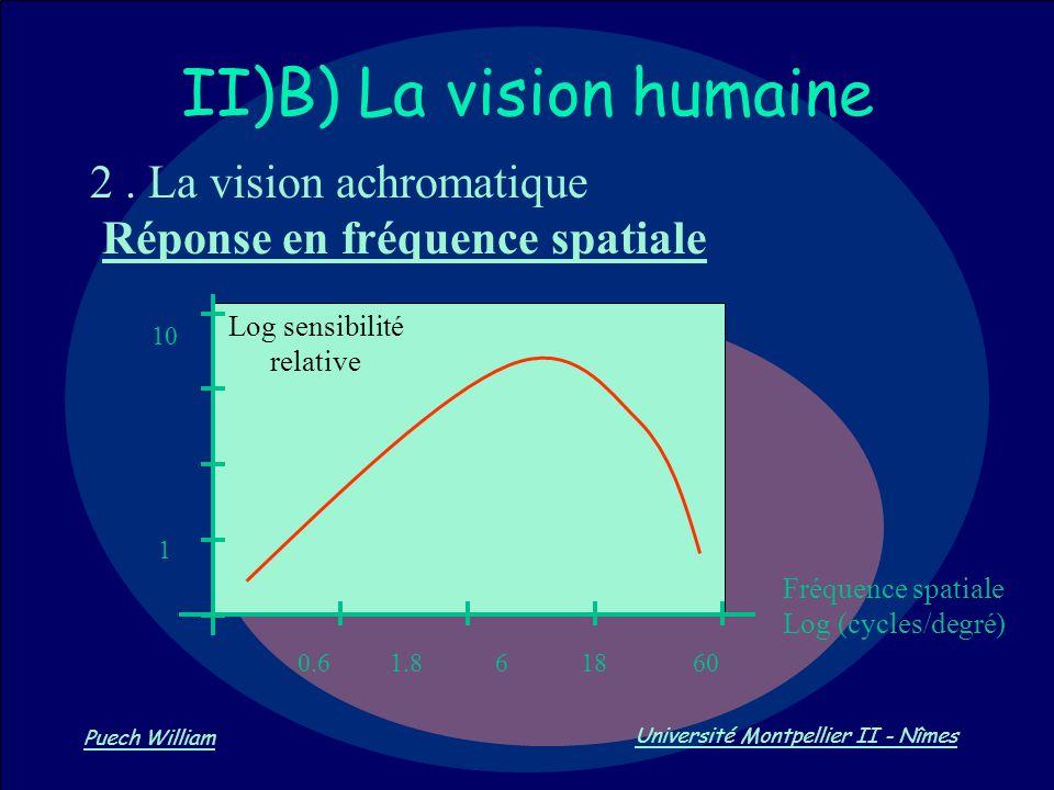 II)B) La vision humaine
