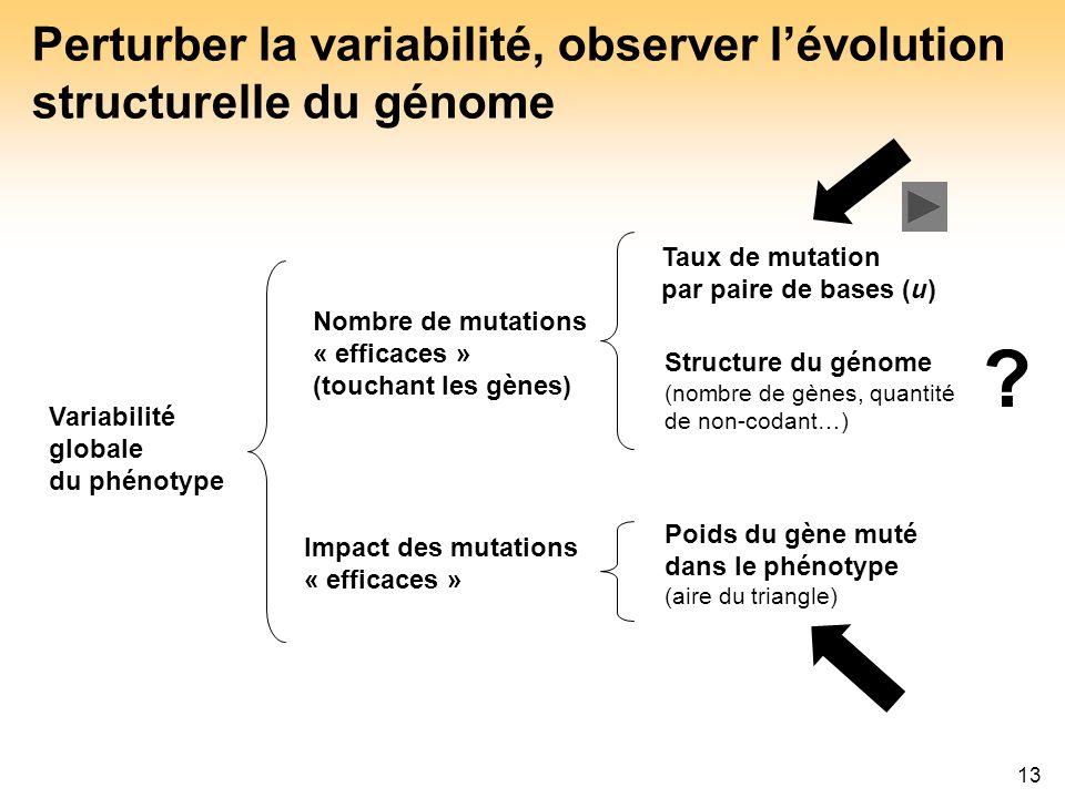 Perturber la variabilité, observer l'évolution structurelle du génome
