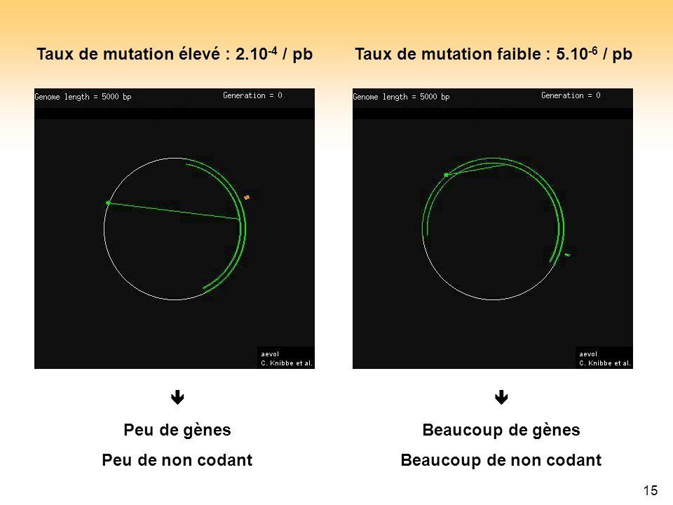 Taux de mutation élevé : 2.10-4 / pb