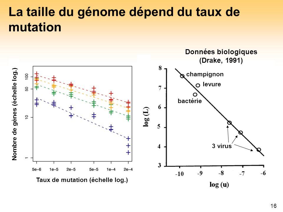 La taille du génome dépend du taux de mutation