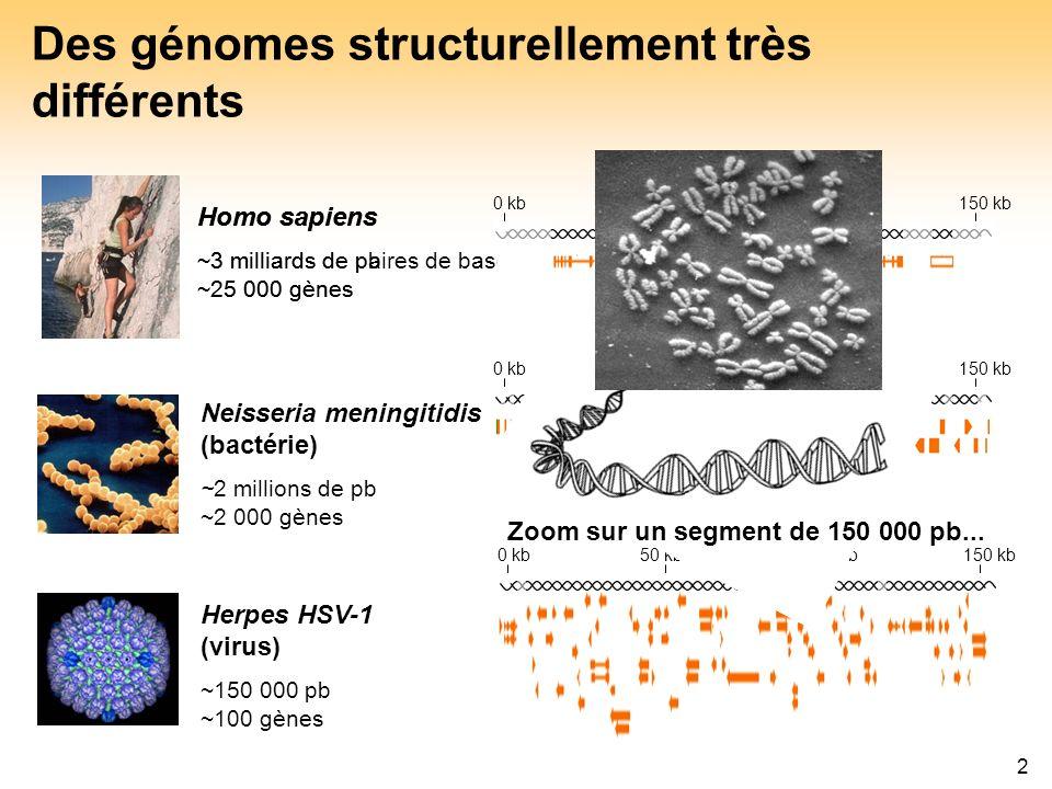 Des génomes structurellement très différents
