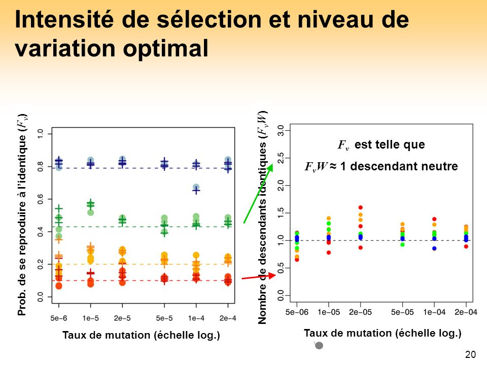 Intensité de sélection et niveau de variation optimal