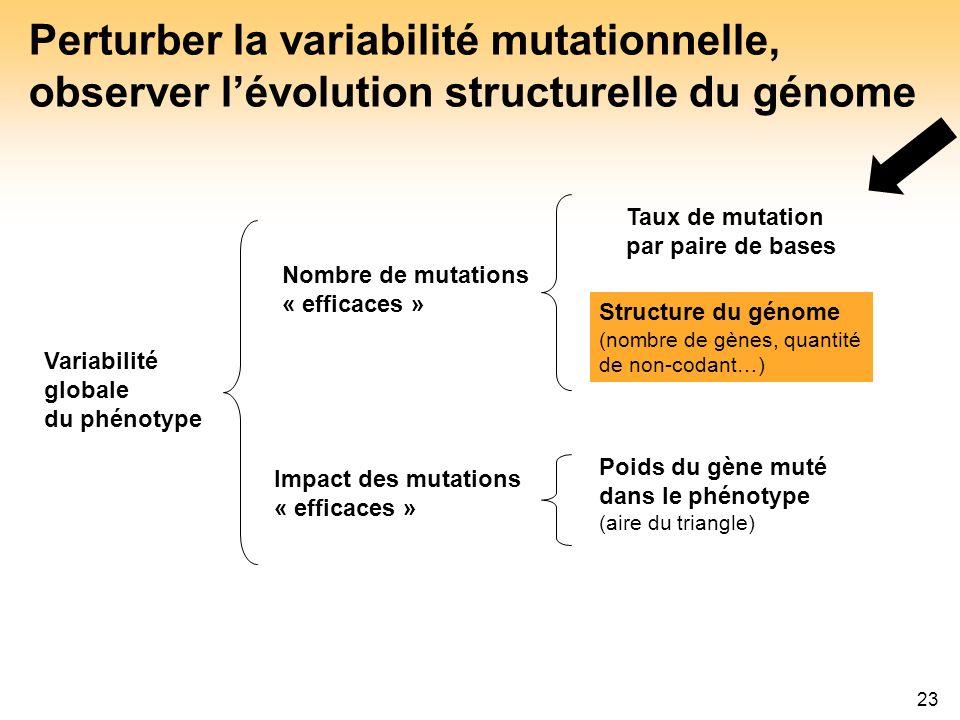 Perturber la variabilité mutationnelle, observer l'évolution structurelle du génome