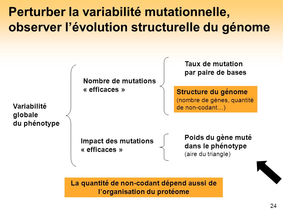 La quantité de non-codant dépend aussi de l'organisation du protéome