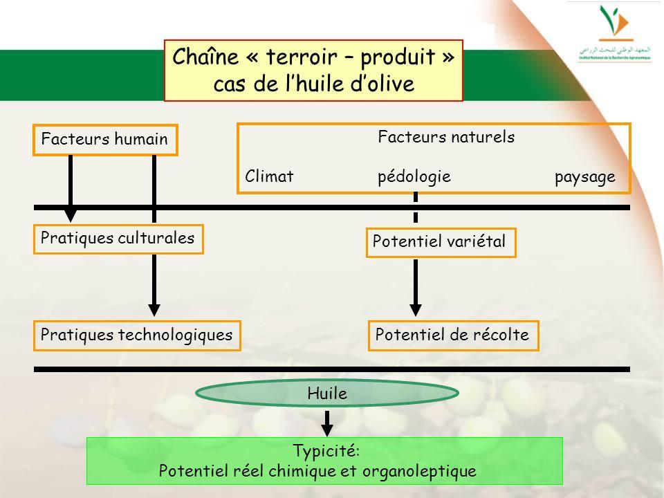 Chaîne « terroir – produit »