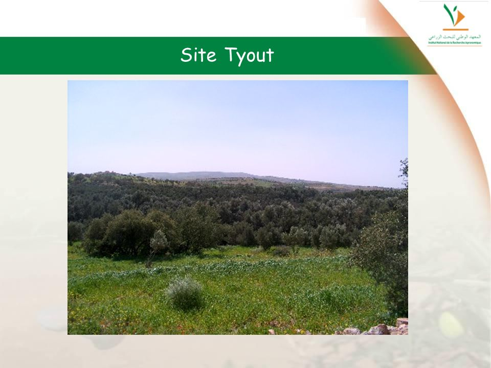 Site Tyout